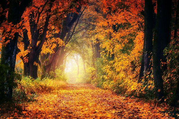 Forêt de l'Anjou